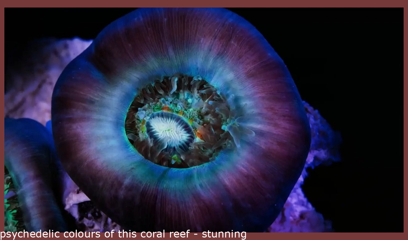 psychedelic colours of this coral reef